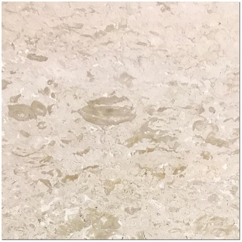 Shell Stone Limestone Tile 24x24 Brushed